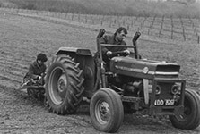 Planting the First Strawberries 1976
